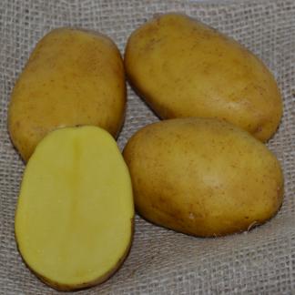 """Sadbové zemiaky žlté skoré """"PAROLI"""" 5 kg"""