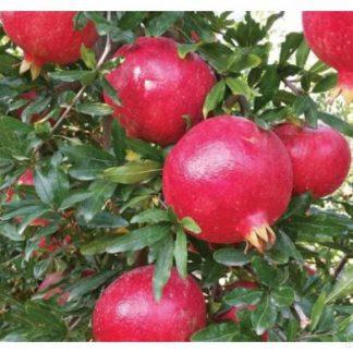 Menej rozšírené ovocné druhy