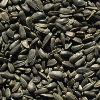 Slnečnica čierna 25 kg vrece