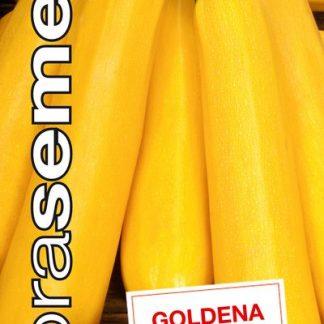 """Cuketa kríčková žltá """"GOLDENA"""""""